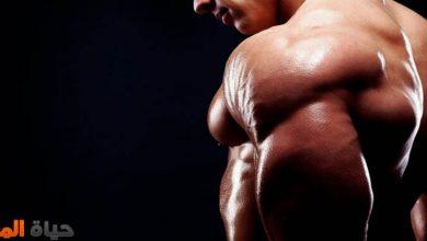 الأطعمة التي تساعد في بناء العضلات