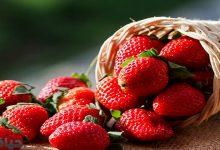 فوائد أكل الفراولة لصحة الجسم